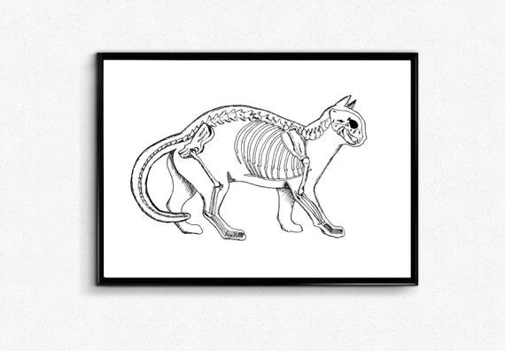 Black And White Cat Anatomy Art Print Cat Skeleton Poster Etsy