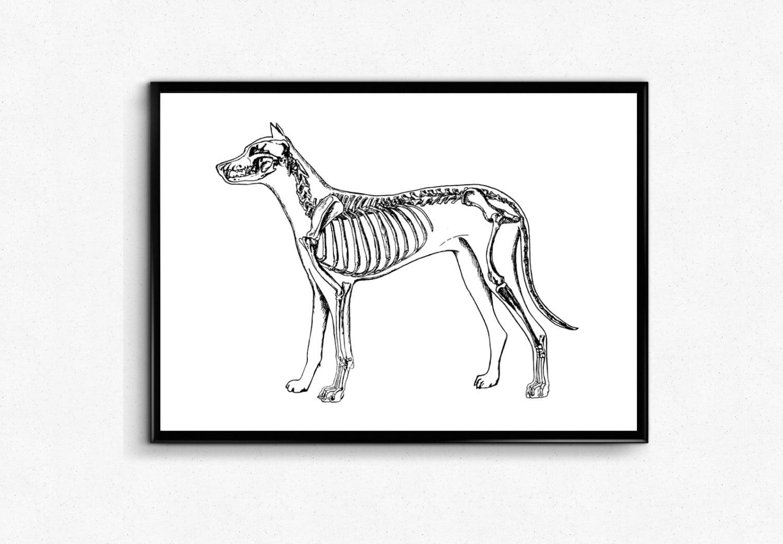 Dog Anatomy Art Print Animal Anatomy Dog Skeleton Poster   Etsy