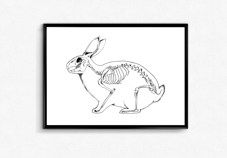 Rabbit Art Print Anatomy Bunny Poster Rabbit Skeleton | Etsy