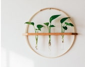 Bamboo Wood wall hanging propagation vase