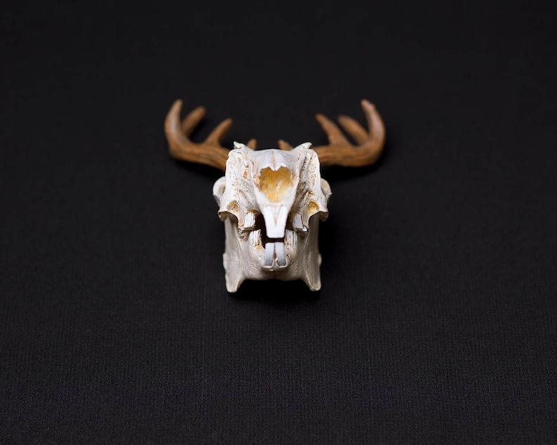 Jackalope Skull