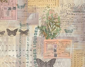 Tim Holtz Wallflower Botanical Fabric // FreeSpirit PWTH028.8MULT by the Half Yard