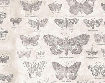 Tim Holtz Monochrome Butterfly Fabric // FreeSpirit PWTH004-PARCHMENT by the Half Yard