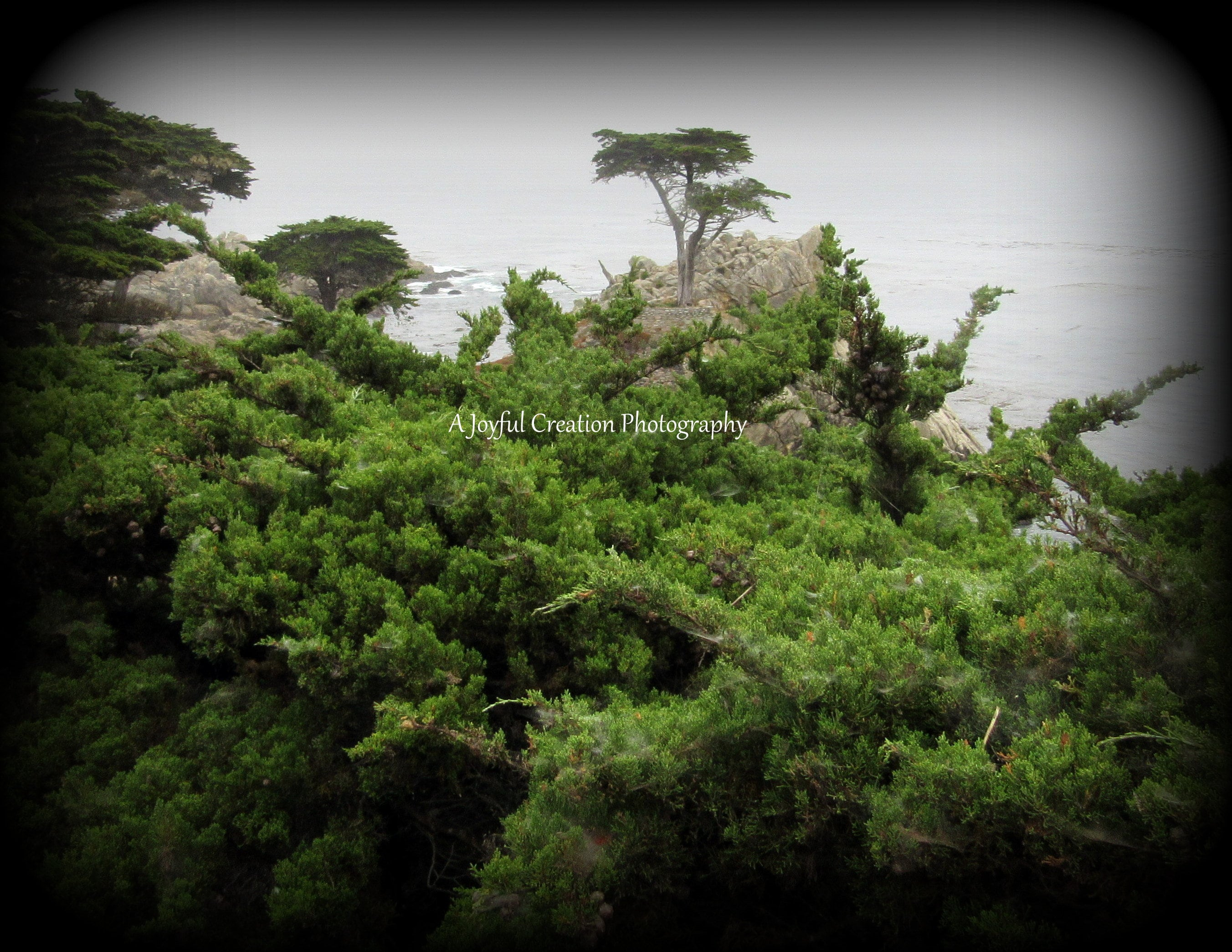 Cypress Point 17 Mile Drive Monetery CA 8x10 Photograph