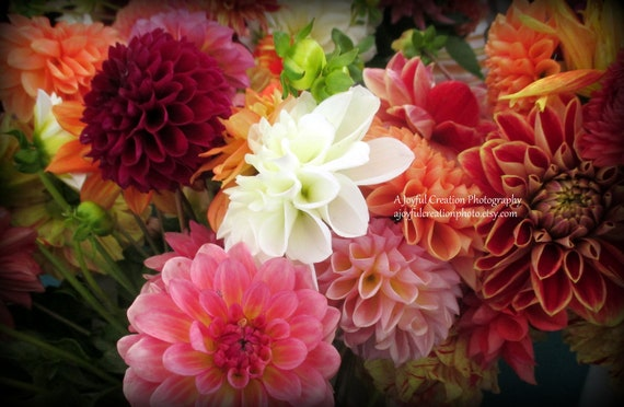 Dahlia Dahlias Flowers Dahlia Photo Dahlias Photo Etsy