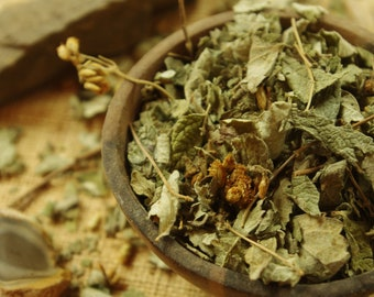 Calea Zacatechichi | Wild Harvest | Mexican Dream Herb | Thle Pelakano | Leaves of the Gods