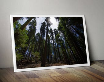 Forest, Yosemite, National Park, Yosemite Print, Yosemite Photography, Travel Photography, Nature Photography, California, Nature, Trees