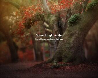 Autumn Tree Digital Background