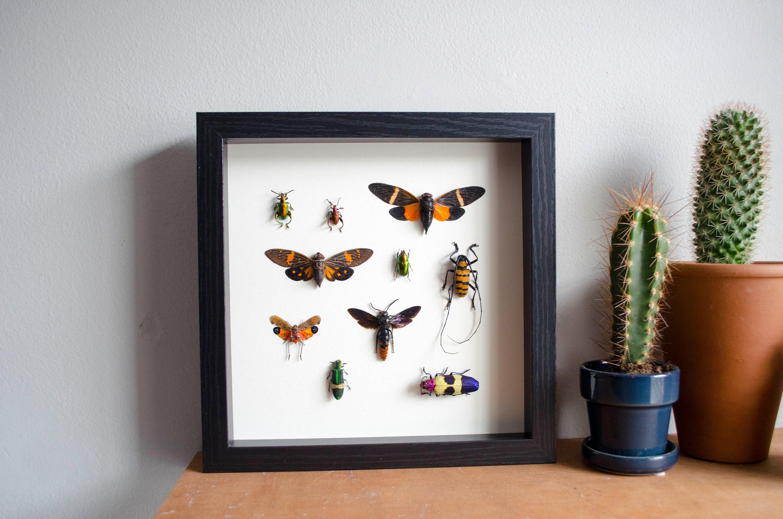 Orange Zikaden Lanternfly und Wespe und verschiedene Käfer