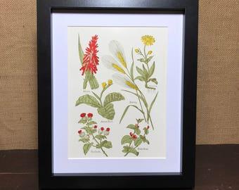 Botanic Herb Print | Herbs Print | Herb Posters | Balm Mint | Burdock | Aloes | Arnica | Arrow Root | Barley