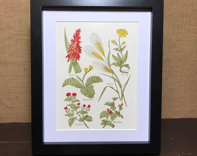 Botanic Herb Print   Herbs Print   Herb Posters   Balm Mint   Burdock   Aloes   Arnica   Arrow Root   Barley