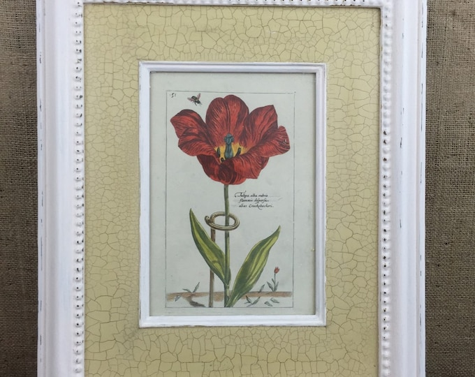 BOTANICAL PRINTS / Vintage Style Framed Botanical Prints / Vintage Botanicals / Large Framed Prints / Cream Crackle Glaze Frames