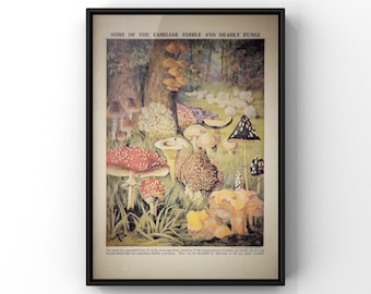 Edible and Deadly Fungi Print | Antique Style Mushroom Botanical Species Chart | Vintage Book Plate  Print 8x10 inches or A4 size | SC00335