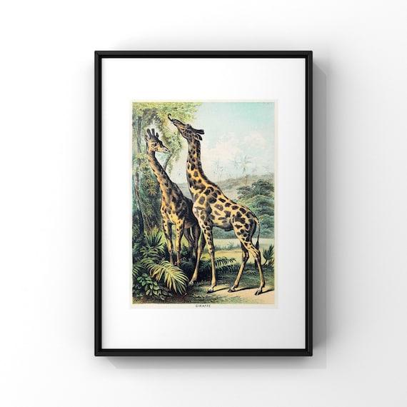 Giraffe Book Page Illustration by John Karst Poster Print | Jungle Animal Wall Decor | Animal Portrait Poster Art UK | A2 A3 A4 A5
