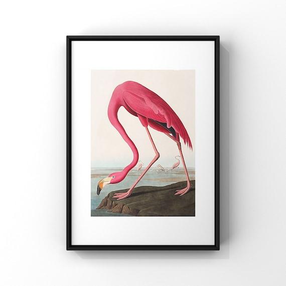 American Pink Flamingo by John James Audubon Poster Print | Audonon Birds Fine Art Poster | Natural History Wall Decor UK A2 A3 A4 A5