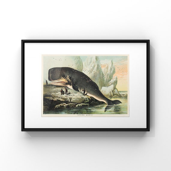 Sperm Whale Naturalist Illustration by John Karst Poster Print | Whales Wall Decor | Animal Horizontal Landscape Poster Art UK | A2 A3 A4 A5