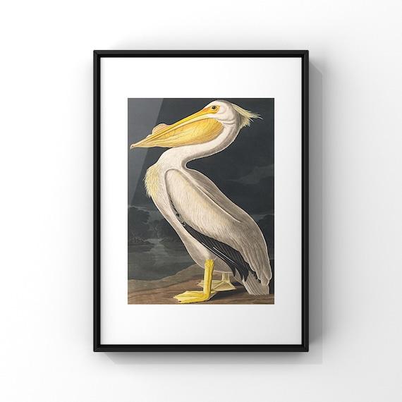 American White Pelican by John James Audubon Poster Print | Audonon Birds Fine Art Poster | Natural History Wall Decor UK A2 A3 A4 A5