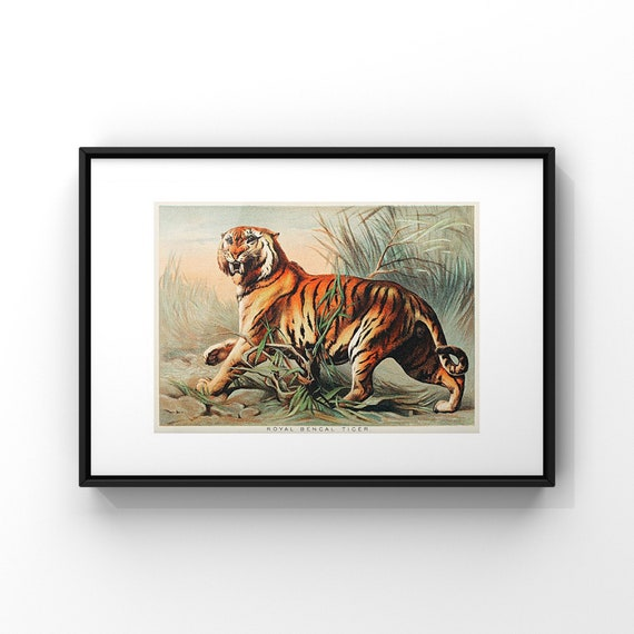 Royal Bengal Tiger Book Page Illustration by John Karst Poster Print | Jungle Animal Wall Decor | Horizontal Landscape Art UK | A2 A3 A4 A5