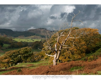 Dead Elm and autumn oak woodland by Screel Hill, Galloway