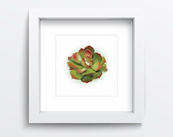 Nature print of succulent plant. Green and red Echeveria botany print. Nature Wall Art. Hen and chicks cactus digital print INSTANT DOWNLOAD