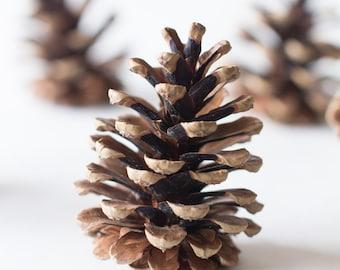 Pine cones (75), bulk, natural/untreated, sanitized, Canada pinecones/ Crafting, Wreaths, Home Decor, Autumn, Rustic Wedding
