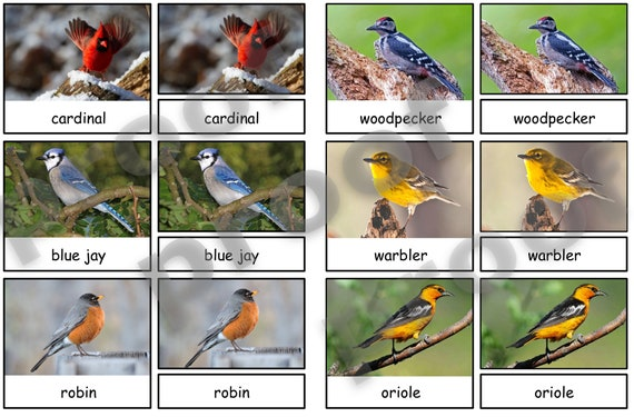 Backyard Birds  Montessori 3-part cards  Montessori Matching
