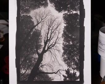 Platinum/Palladium Print: Among the Living, 8x12