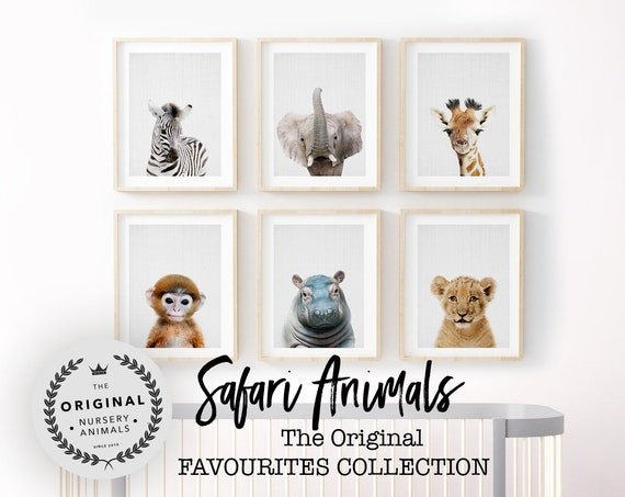 Safari Animal Favourites Collection - Digital Download