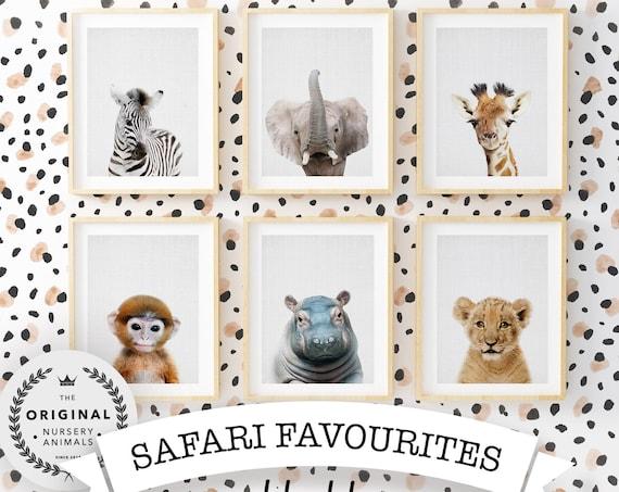 Safari Animal Favourites Collection - Digital Download