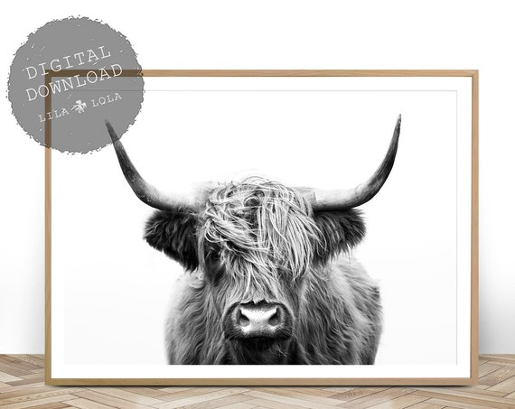 Highland Cow Print, Black and White, Farmhouse Decor, Shaggy Cow Photo, Large Poster, Printable Digital Download, Rustic Decor, Farm Animal