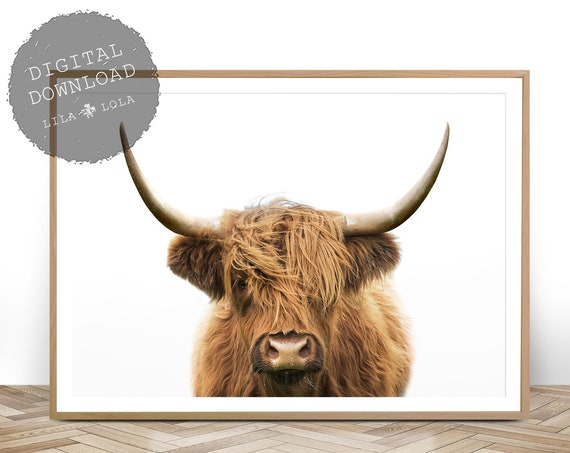 Highland Cow Print, Printable Wall Art, Farmhouse Decor, Shaggy Cow Photo, Large Poster, Digital Download, Rustic Decor, Farm Animal