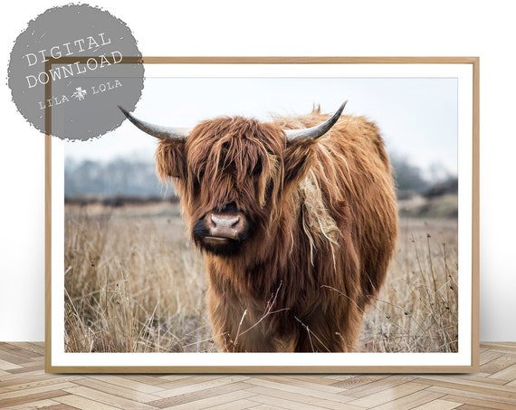 Highland Cow Print, Digital Download, Highland Cow Photography, Printable Wall Art, Bull Photo, Large Modern Poster, Digital Cow Wall Art