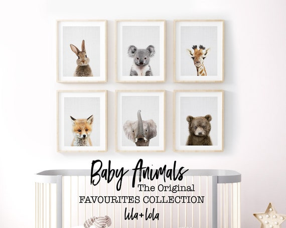 Baby Animal Favourites Collection - Digital Download