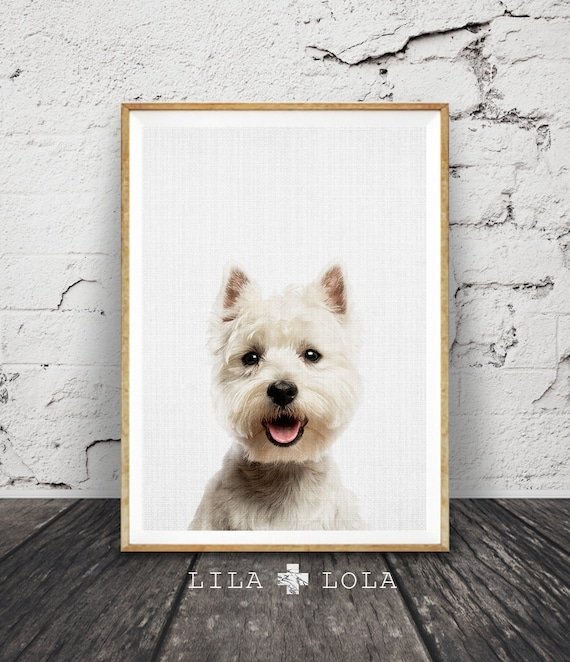Dog Wall Art Print, West Highland White Terrier Photo, Printable Poster Digital Download, Nursery Animal Decor, Modern Minimalist Puppy Gift