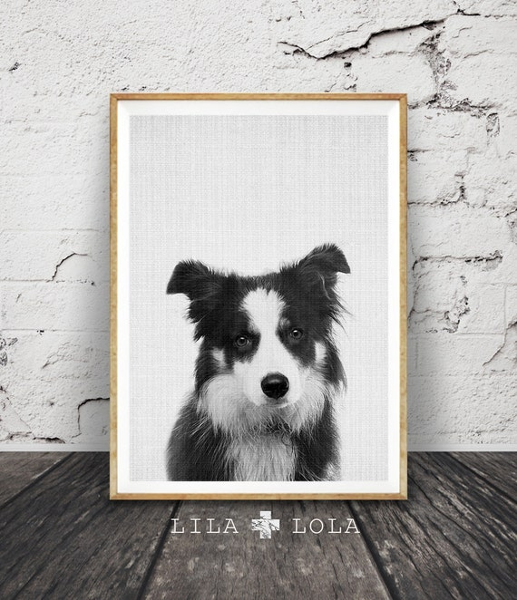Border Collie Wall Art Print, Dog Photo, Nursery Animal Decor, Printable Poster, Digital Download, Black and White Minimalist Farm Sheep Dog