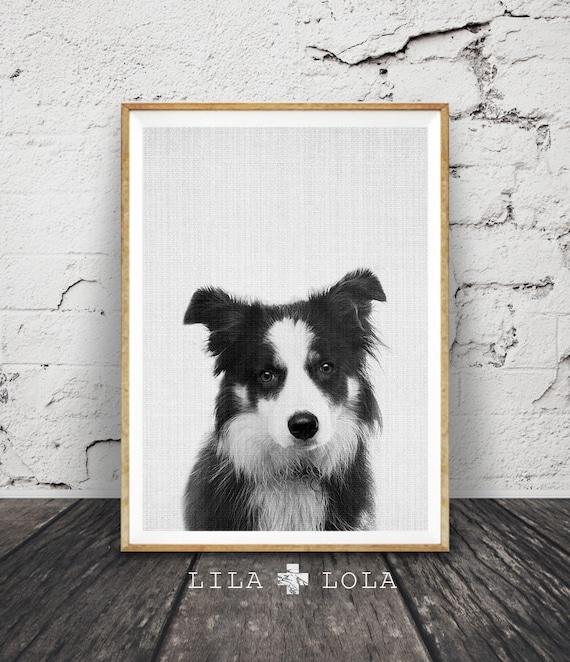 Border Collie Wall Art Print, Dog Photo, Nursery Animal Decor, Printable Poster, Digital Download, Black and White Minimalist Farm Sheep Dog