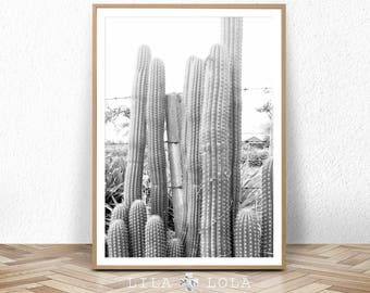 Cactus Print, Cacti Photo, Black and White Photography,  Digital Download, Large Printable Wall Art, South Western Decor, Southwestern Print