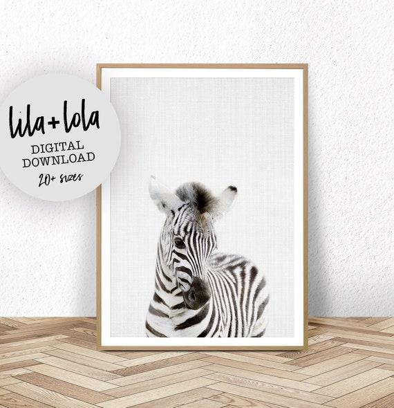 Baby Zebra Print - Digital Download