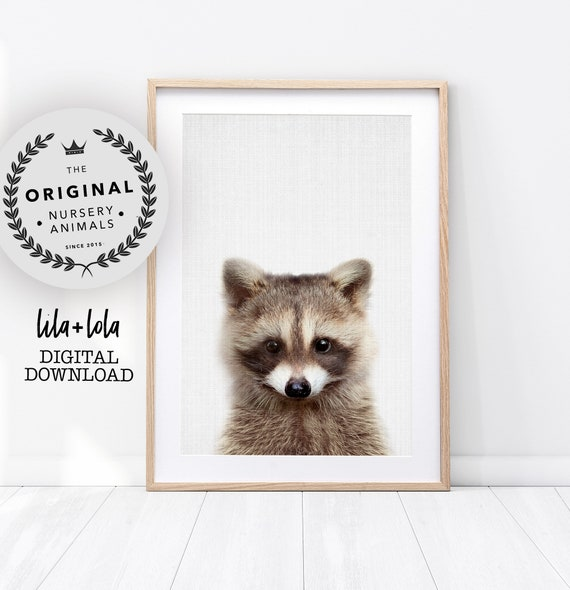 Baby Raccoon Print - Digital Download