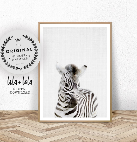 Baby Zebra Print - Digital Download