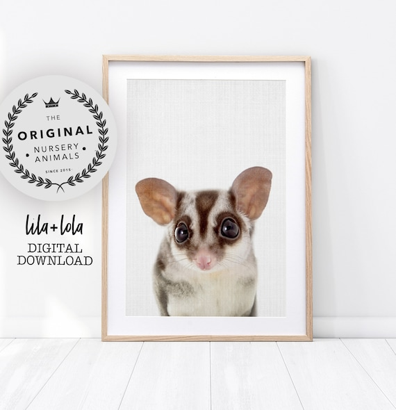 Baby Sugar Glider Print - Digital Download