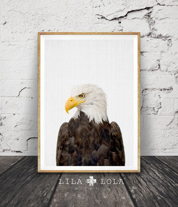 Bald Eagle Print, American Eagle Wall Art Poster, Printable Digital Download, Hawke, Boys Room Decor, Bird Animal Photography, Minimalist