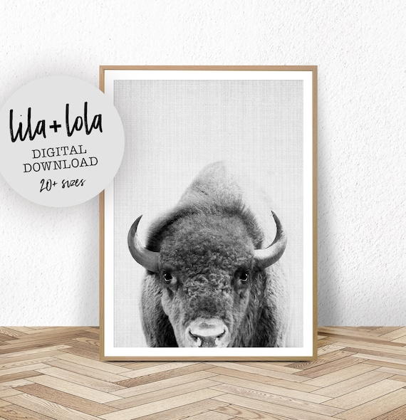 Bison Print - Digital Download