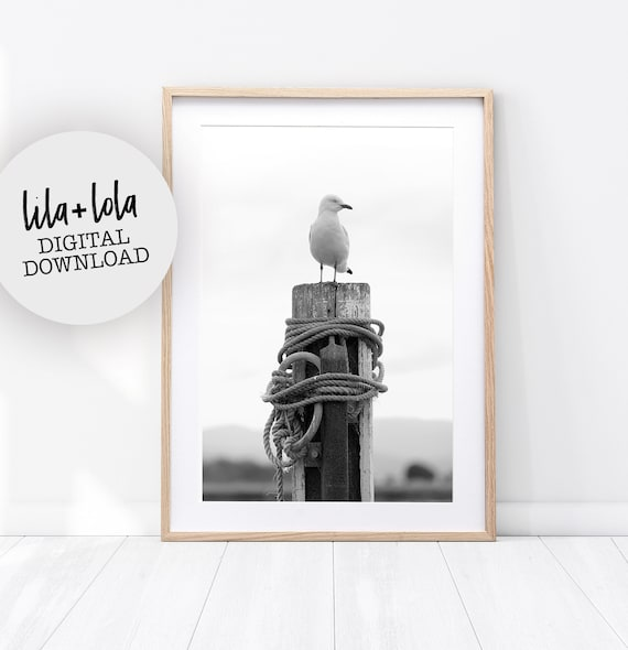 Seagull Print - Digital Download