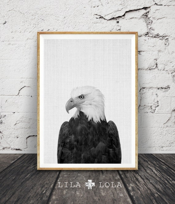 Eagle Print, Hawk Photography, Bird of Prey, Animal Wall Art, Black and White Photo, Printable Art, Instant Download, Modern Minimal, Large