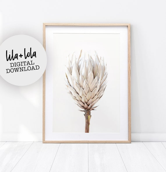 Protea Print - Digital Download
