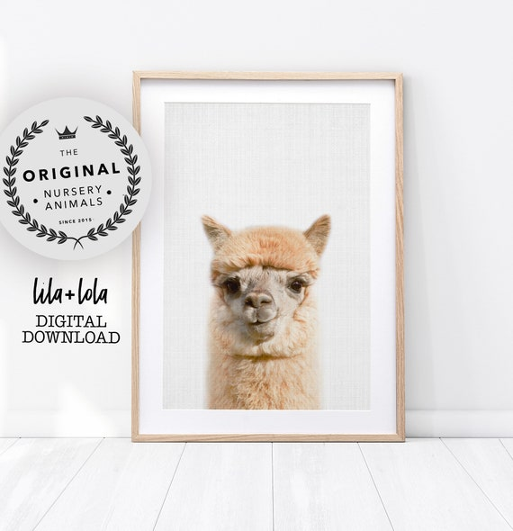 Alpaca Print, Llama Printable Wall Art - Nursery Farm Animal Poster, Farmhouse Decor, Colourful Baby Room Poster, Digital Download