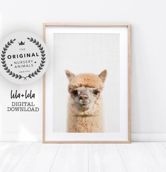 Alpaca Print, Llama Printable Wall Art - Nursery Farm Animal Poster, Farmhouse Decor, Colourful Baby Room Poster, Digital Download