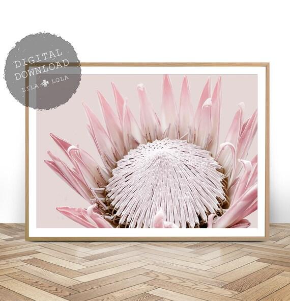 King Protea Print, Australian Native Flower, Botanical, Large Wall Art Poster, Printable Digital Download, Photography, Blush Pink