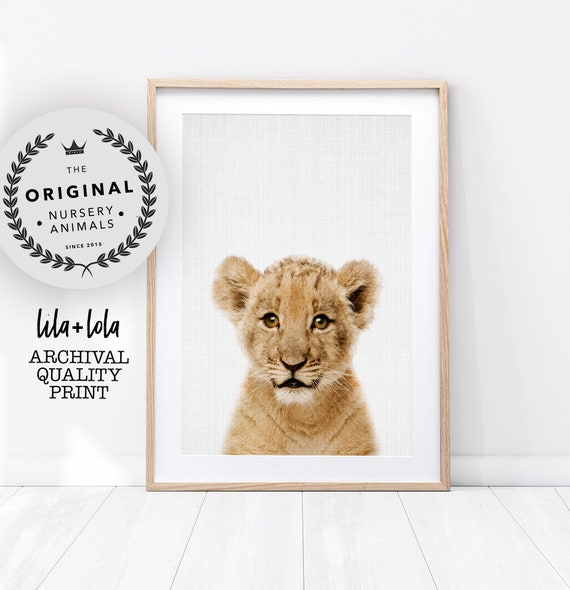Baby Lion Print - Printed and Shipped
